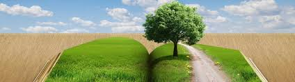 Immagine albero sulibro