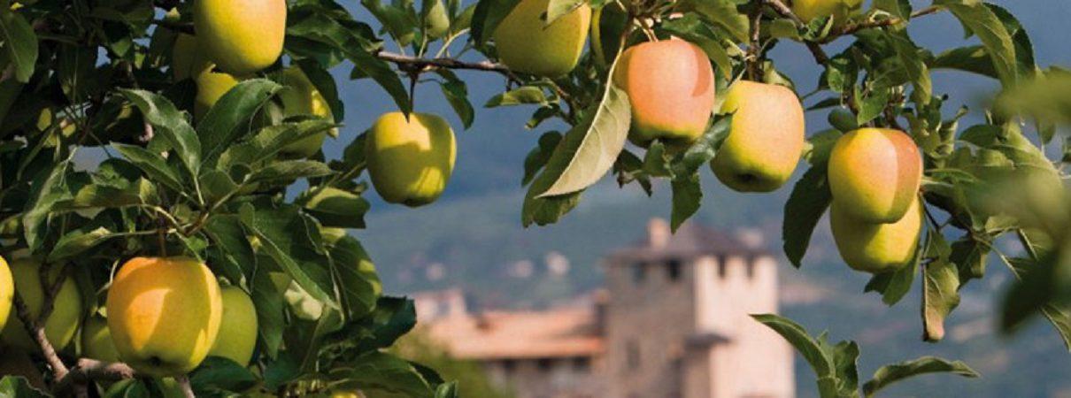 Foto ramo di melo